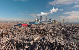 Aerial image of a woodworking plant with piles of logs around