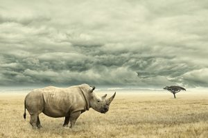 Photo manipulation of a Rhino in dry African savana with heavy dramatic clouds above